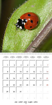 Pictures of Wirral's Wonderful Wildlife (Wall Calendar 2019 300 × 300 mm Square) - Produktdetailbild 7