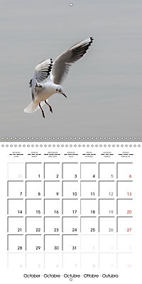 Pictures of Wirral's Wonderful Wildlife (Wall Calendar 2019 300 × 300 mm Square) - Produktdetailbild 10