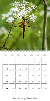 Pictures of Wirral's Wonderful Wildlife (Wall Calendar 2019 300 × 300 mm Square) - Produktdetailbild 6