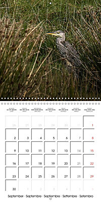Pictures of Wirral's Wonderful Wildlife (Wall Calendar 2019 300 × 300 mm Square) - Produktdetailbild 9