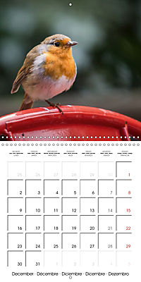 Pictures of Wirral's Wonderful Wildlife (Wall Calendar 2019 300 × 300 mm Square) - Produktdetailbild 12