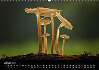 Pilze, die stillen Waldbewohner 2019 (Wandkalender 2019 DIN A2 quer) - Produktdetailbild 1