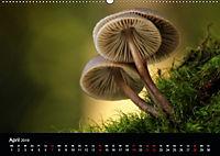 Pilze, die stillen Waldbewohner 2019 (Wandkalender 2019 DIN A2 quer) - Produktdetailbild 4
