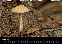 Pilze, die stillen Waldbewohner 2019 (Wandkalender 2019 DIN A2 quer) - Produktdetailbild 3