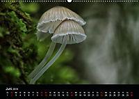 Pilze, die stillen Waldbewohner 2019 (Wandkalender 2019 DIN A2 quer) - Produktdetailbild 6