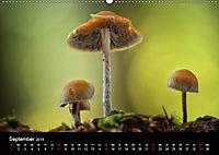 Pilze, die stillen Waldbewohner 2019 (Wandkalender 2019 DIN A2 quer) - Produktdetailbild 9