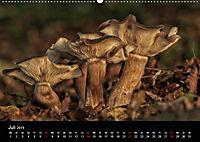 Pilze, die stillen Waldbewohner 2019 (Wandkalender 2019 DIN A2 quer) - Produktdetailbild 7