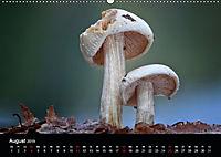 Pilze, die stillen Waldbewohner 2019 (Wandkalender 2019 DIN A2 quer) - Produktdetailbild 8