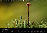 Pilze, die stillen Waldbewohner 2019 (Wandkalender 2019 DIN A2 quer) - Produktdetailbild 11