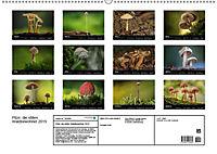 Pilze, die stillen Waldbewohner 2019 (Wandkalender 2019 DIN A2 quer) - Produktdetailbild 13
