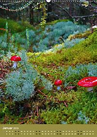 Pilze - Farbenpracht im Wald (Wandkalender 2019 DIN A2 hoch) - Produktdetailbild 1