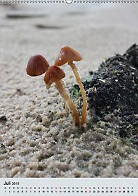 Pilze - Farbenpracht im Wald (Wandkalender 2019 DIN A2 hoch) - Produktdetailbild 7