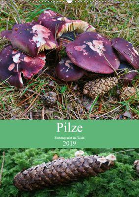 Pilze - Farbenpracht im Wald (Wandkalender 2019 DIN A2 hoch), Almut Barden