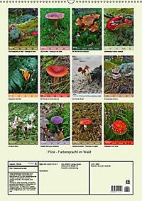 Pilze - Farbenpracht im Wald (Wandkalender 2019 DIN A2 hoch) - Produktdetailbild 13