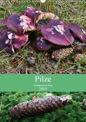 Pilze - Farbenpracht im Wald (Wandkalender 2019 DIN A3 hoch), Almut Barden