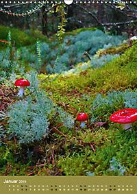 Pilze - Farbenpracht im Wald (Wandkalender 2019 DIN A3 hoch) - Produktdetailbild 1