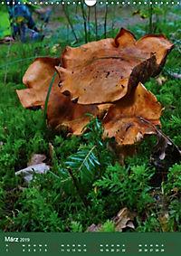 Pilze - Farbenpracht im Wald (Wandkalender 2019 DIN A3 hoch) - Produktdetailbild 3