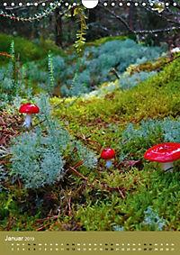 Pilze - Farbenpracht im Wald (Wandkalender 2019 DIN A4 hoch) - Produktdetailbild 12