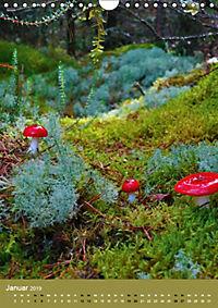 Pilze - Farbenpracht im Wald (Wandkalender 2019 DIN A4 hoch) - Produktdetailbild 1