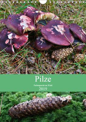 Pilze - Farbenpracht im Wald (Wandkalender 2019 DIN A4 hoch), Almut Barden
