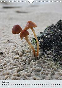Pilze - Farbenpracht im Wald (Wandkalender 2019 DIN A4 hoch) - Produktdetailbild 7