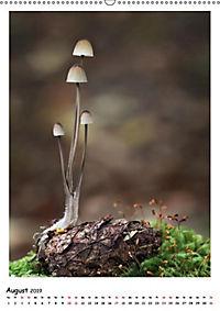 Pilzgalerie - Faszinierende Pilzaufnahmen aus der Region Rheinland-Pfalz (Wandkalender 2019 DIN A2 hoch) - Produktdetailbild 4
