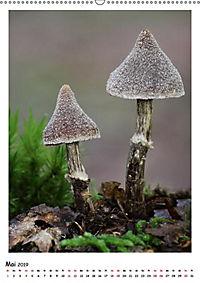 Pilzgalerie - Faszinierende Pilzaufnahmen aus der Region Rheinland-Pfalz (Wandkalender 2019 DIN A2 hoch) - Produktdetailbild 5