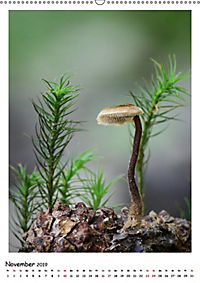 Pilzgalerie - Faszinierende Pilzaufnahmen aus der Region Rheinland-Pfalz (Wandkalender 2019 DIN A2 hoch) - Produktdetailbild 12