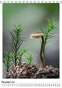 Pilzgalerie - Faszinierende Pilzaufnahmen aus der Region Rheinland-Pfalz (Tischkalender 2019 DIN A5 hoch) - Produktdetailbild 1