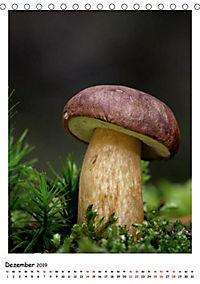 Pilzgalerie - Faszinierende Pilzaufnahmen aus der Region Rheinland-Pfalz (Tischkalender 2019 DIN A5 hoch) - Produktdetailbild 2
