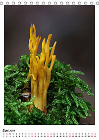 Pilzgalerie - Faszinierende Pilzaufnahmen aus der Region Rheinland-Pfalz (Tischkalender 2019 DIN A5 hoch) - Produktdetailbild 6