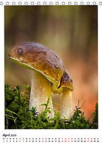 Pilzgalerie - Faszinierende Pilzaufnahmen aus der Region Rheinland-Pfalz (Tischkalender 2019 DIN A5 hoch) - Produktdetailbild 4