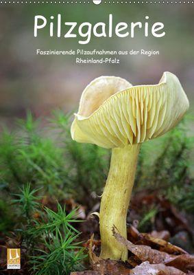 Pilzgalerie - Faszinierende Pilzaufnahmen aus der Region Rheinland-Pfalz (Wandkalender 2019 DIN A2 hoch), Beate Wurster
