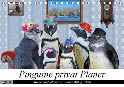 Pinguine privat Planer (Tischkalender 2019 DIN A5 quer), Garrulus glandarius