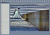 Pinguine privat Planer (Tischkalender 2019 DIN A5 quer) - Produktdetailbild 12
