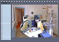 Pinguine privat Planer (Tischkalender 2019 DIN A5 quer) - Produktdetailbild 11