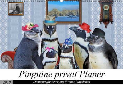 Pinguine privat Planer (Wandkalender 2019 DIN A2 quer), Garrulus glandarius