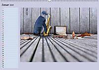 Pinguine privat Planer (Wandkalender 2019 DIN A2 quer) - Produktdetailbild 1