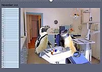 Pinguine privat Planer (Wandkalender 2019 DIN A2 quer) - Produktdetailbild 11