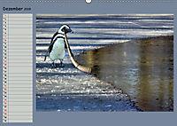 Pinguine privat Planer (Wandkalender 2019 DIN A2 quer) - Produktdetailbild 12
