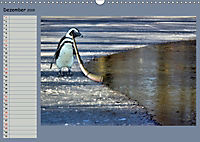 Pinguine privat Planer (Wandkalender 2019 DIN A3 quer) - Produktdetailbild 12