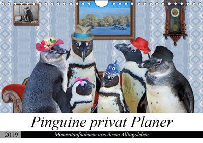 Pinguine privat Planer (Wandkalender 2019 DIN A4 quer), Garrulus glandarius