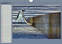 Pinguine privat Planer (Wandkalender 2019 DIN A4 quer) - Produktdetailbild 12