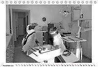 Pinguine privat (Tischkalender 2019 DIN A5 quer) - Produktdetailbild 11