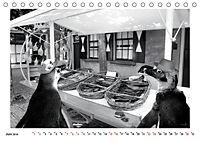 Pinguine privat (Tischkalender 2019 DIN A5 quer) - Produktdetailbild 6