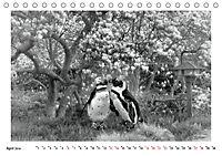 Pinguine privat (Tischkalender 2019 DIN A5 quer) - Produktdetailbild 4