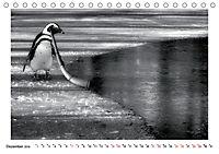 Pinguine privat (Tischkalender 2019 DIN A5 quer) - Produktdetailbild 12
