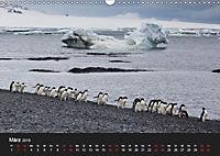 Pinguine - sympathische Frackträger im eisigen Süden (Wandkalender 2019 DIN A3 quer) - Produktdetailbild 3