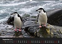 Pinguine - sympathische Frackträger im eisigen Süden (Wandkalender 2019 DIN A3 quer) - Produktdetailbild 9