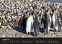 Pinguine - sympathische Frackträger im eisigen Süden (Wandkalender 2019 DIN A3 quer) - Produktdetailbild 8